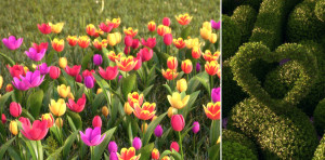 hq-plants-hd-flowers-2-tulip-hd-trees-3-preview